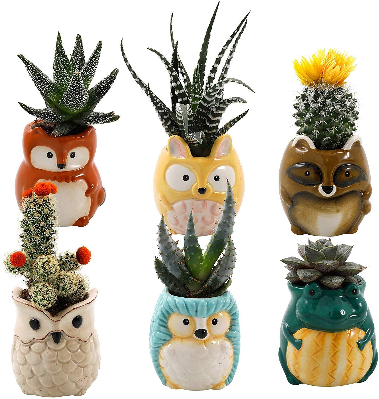 Animal Ceramic Succulent Planters Set Of 6 Giftington